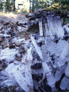 Ice shards on the path