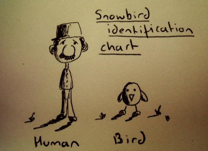 Snowbird identification chart