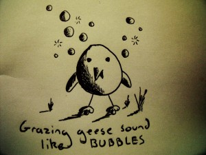 Grazing geese sound like bubbles