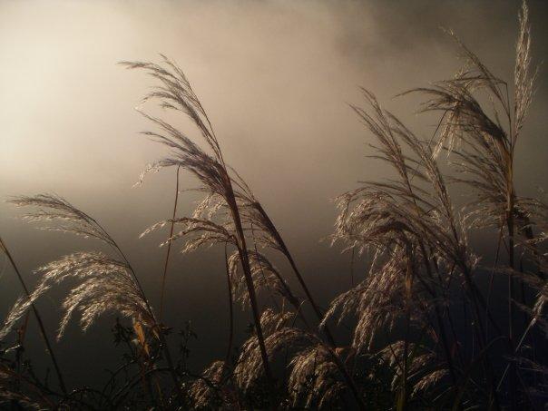 Through the long grass, Peru (Jake Graham)