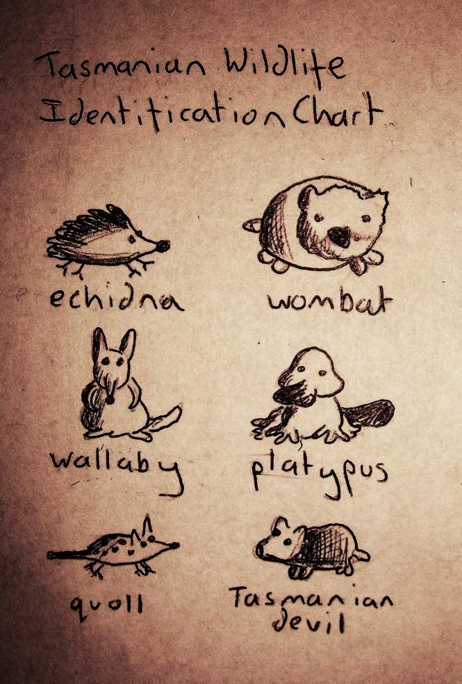 Tasmanian Wildlife Identification Chart