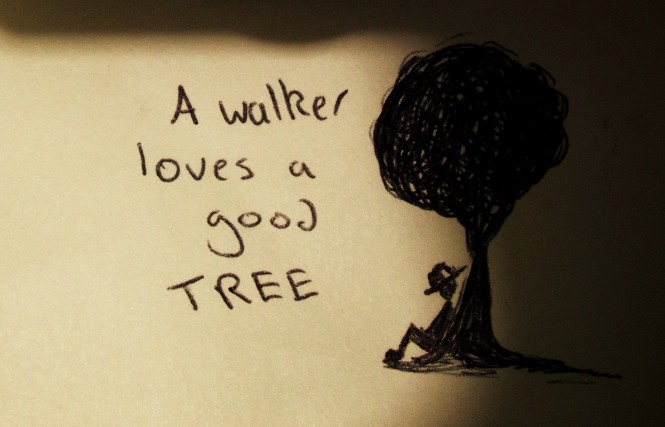 A walker loves a good tree