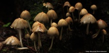Mushrooms (Jake Graham Photography)